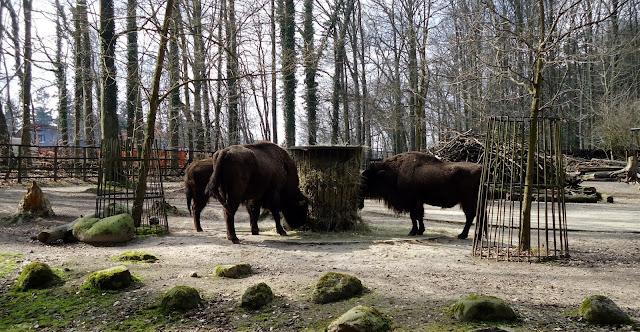 sehenswertes im Zoo Rostock