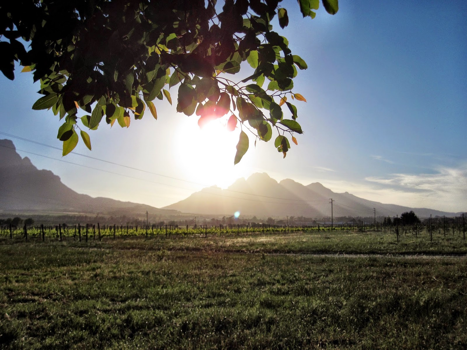Sunset at Val d'Or Estate, Franschhoek
