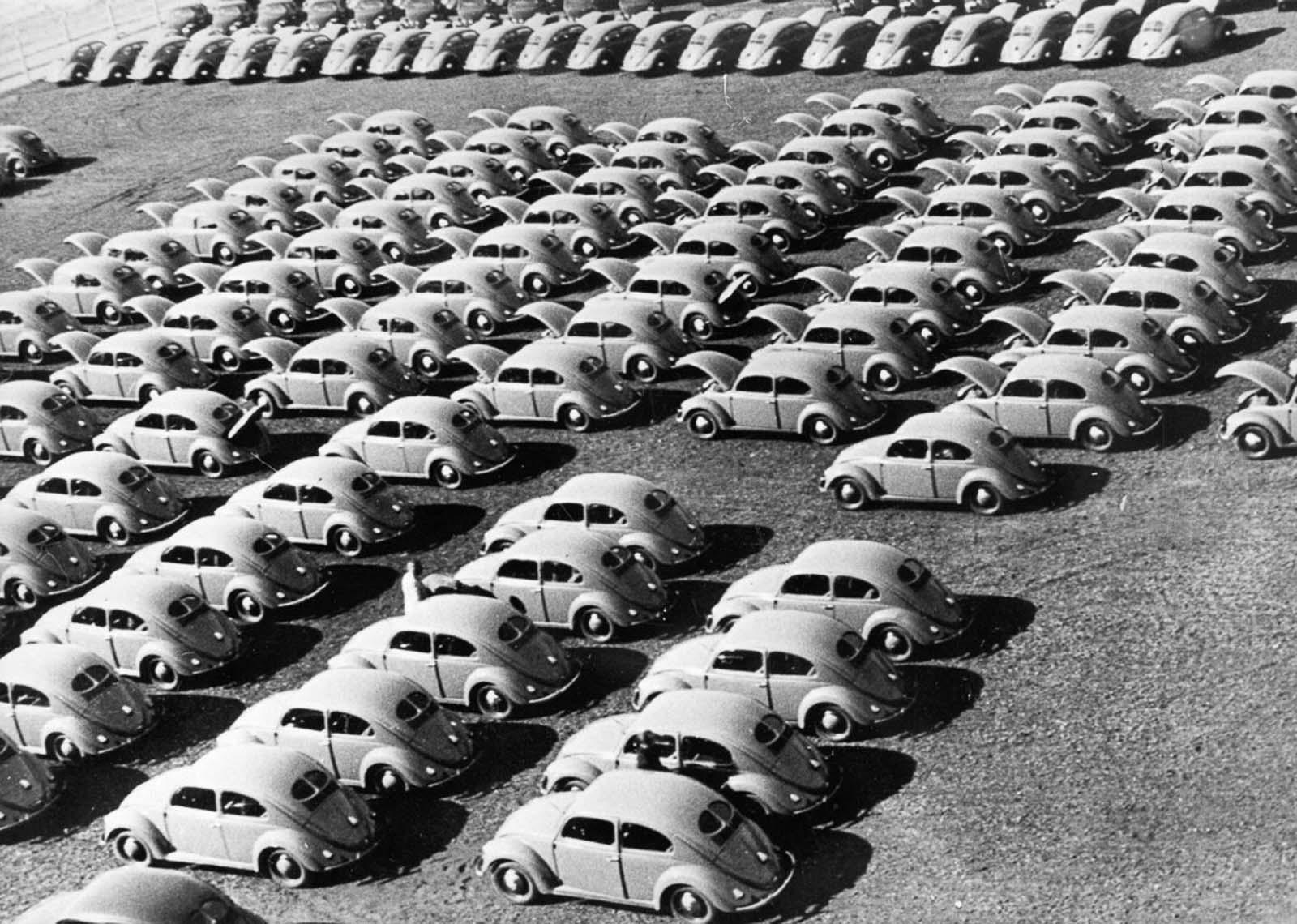 Parked Beetles, 1953.