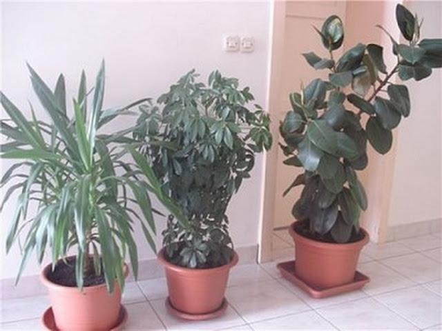 planta care te protejeaza de radiatii
