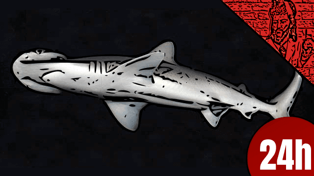 Conheça o tubarão vegetariano - QN NEWS 24h