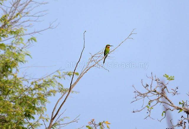 Flores Birdwatching