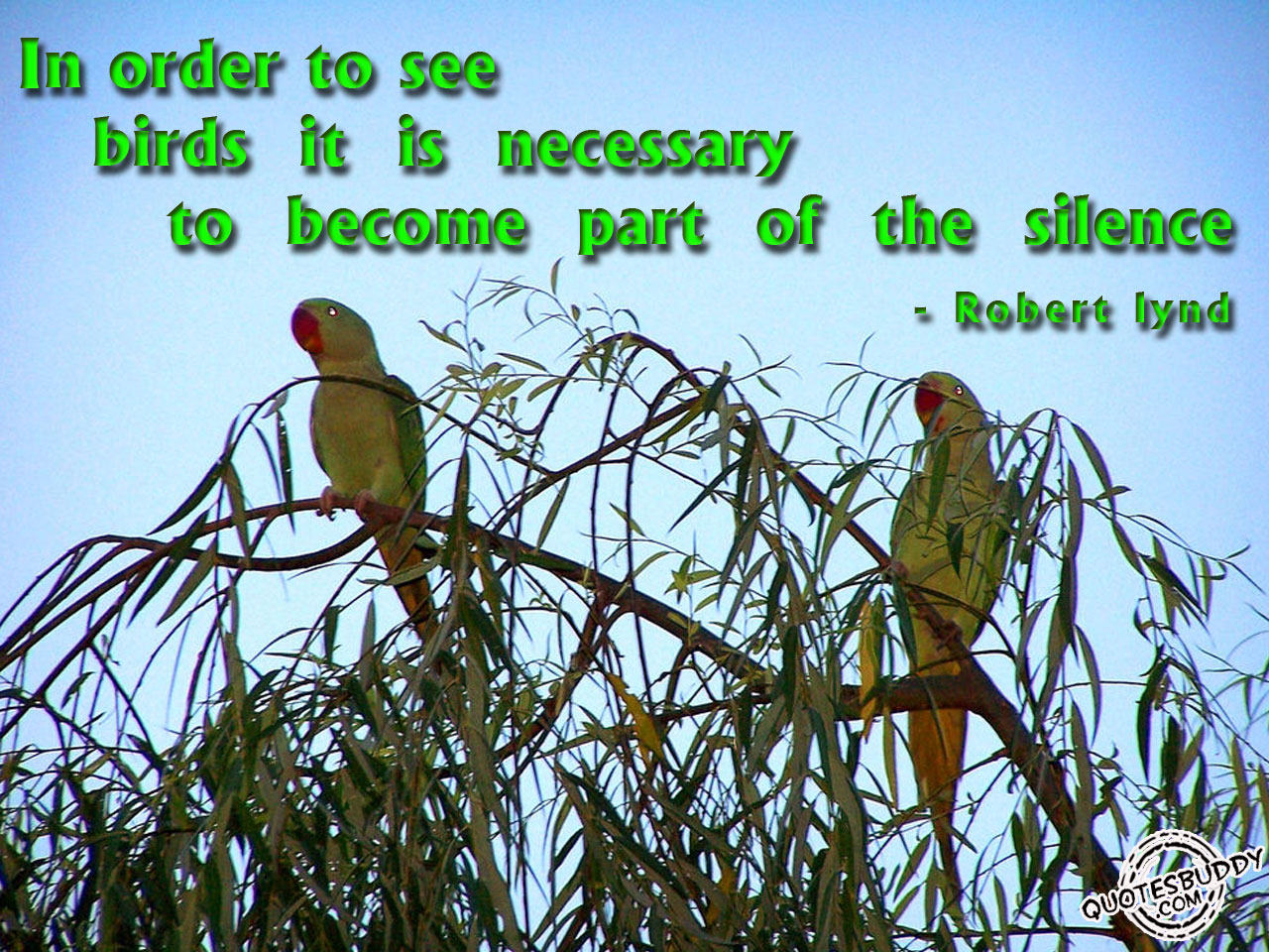 funny wallpapers birds quotes quotations bird quote bird quotes