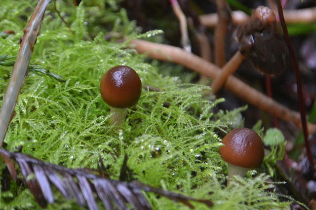 tiny mushrooms among the moss