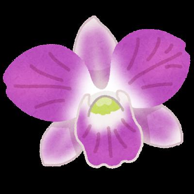 デンファレのイラスト(花)