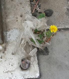 entre la basura una flor