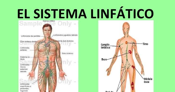 sistena linfático