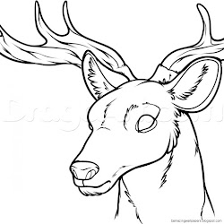deer head draw step animals forest drawings easy drawing skull amazing