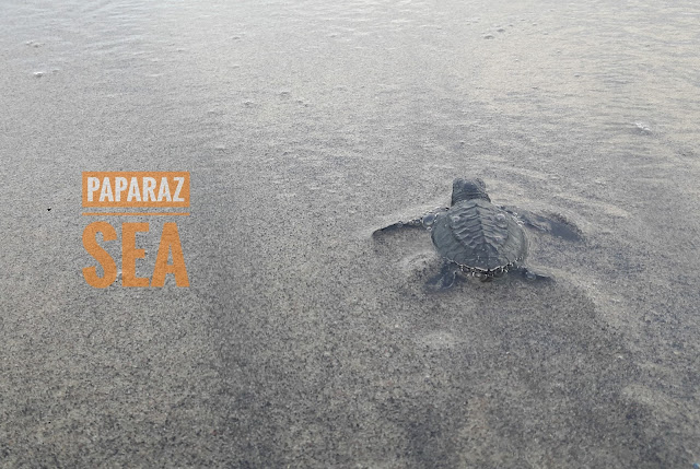 paparazsea, ocean, wildlife, tours