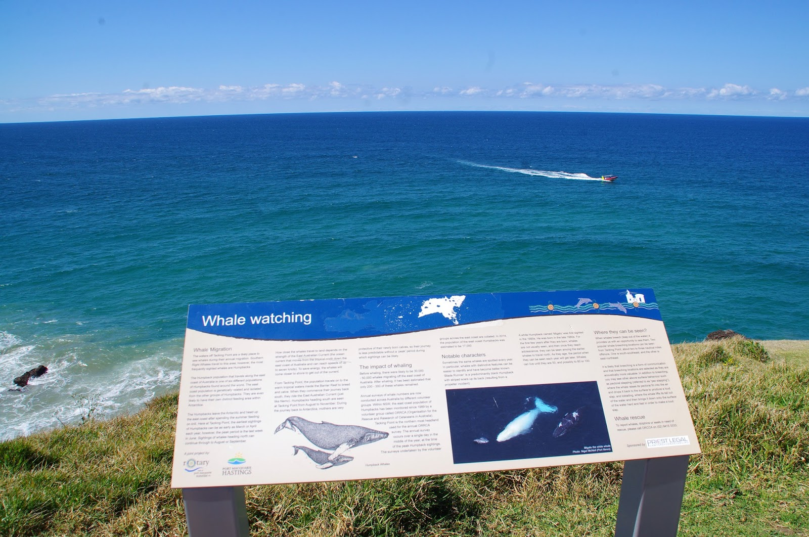 Whale Watching in Port Macquarie, Australia