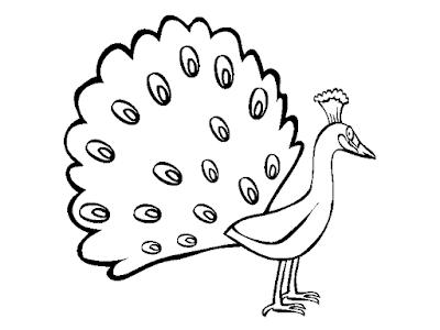 Gambar Mewarnai Burung Merak Untuk Anak Paud Dan Tk Zona Ilmu 2