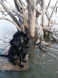 north texas duck hunts/north texas retriever trainers