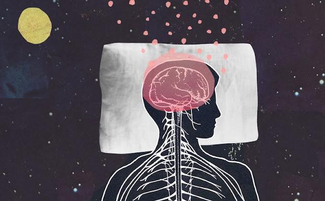 regiões cerebrais e sonho