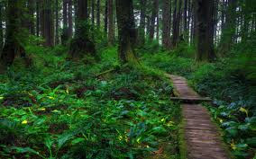 world best forest  hd wallpaper download33