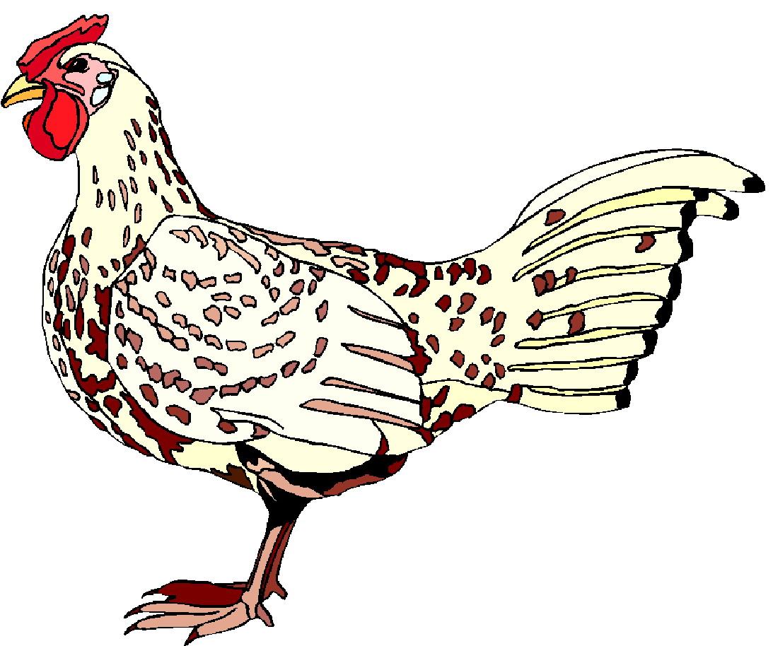 clipart of chickens  - photo #38