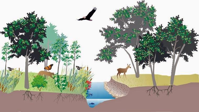 Ekosistem Part 1 Definisi Komponen Penyusun Ekosistem Dudun S News
