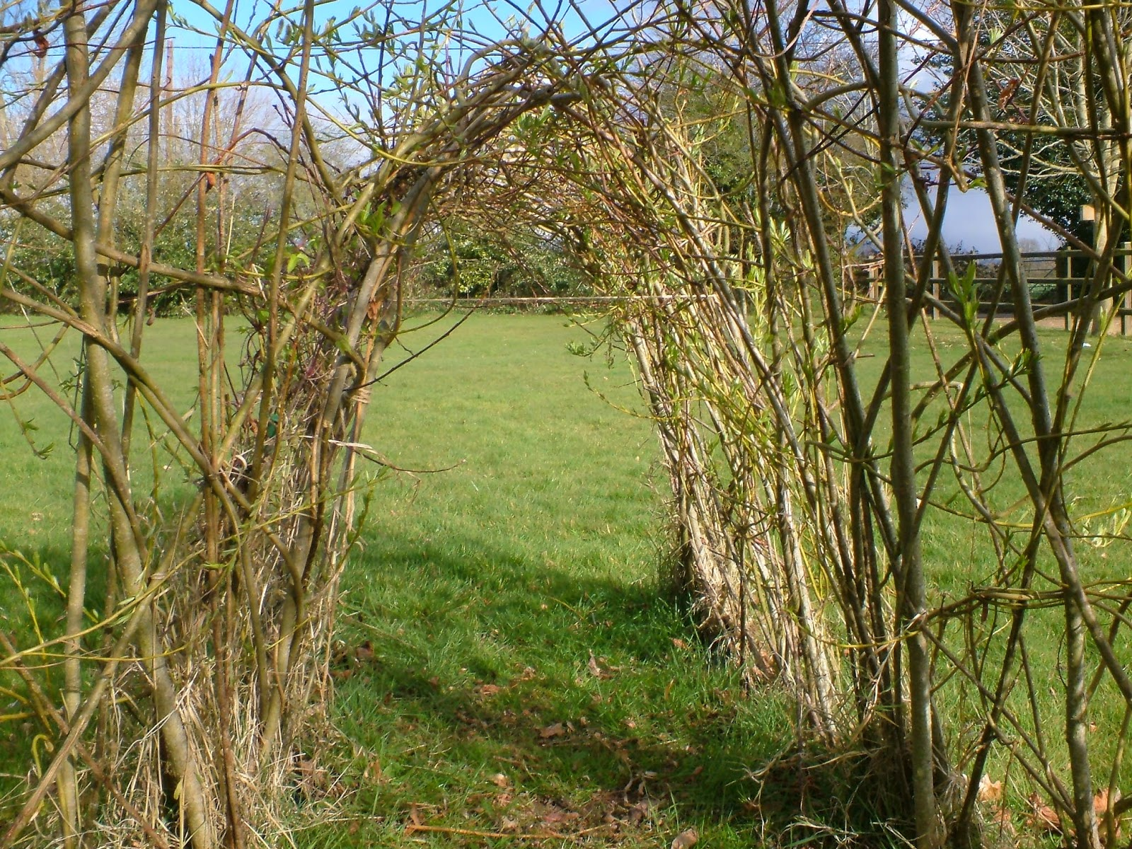 Life Between The Flowers Living Willow Sculptures Making