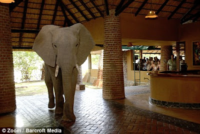 Curiosa imagen de elefante turisteando
