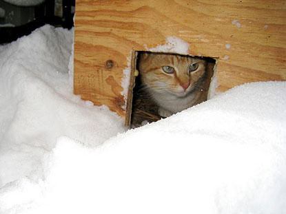 Cat in shelter in the snow