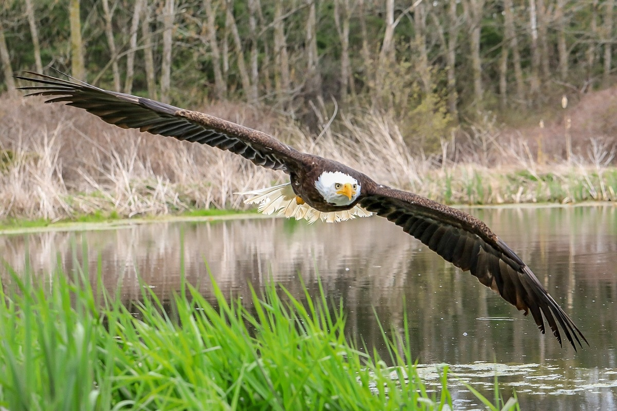 Photographer Captured A Majestic Picture Of A Bald Eagle With Symmetrical Reflection