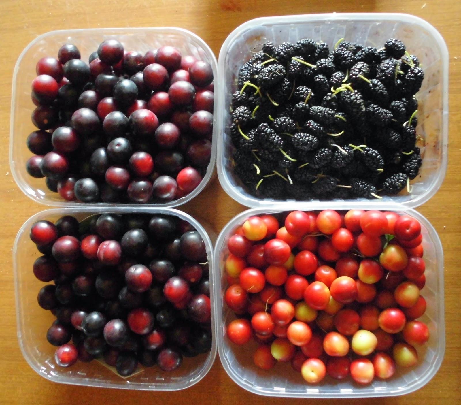raccogliere frutta dimenticata gratis
