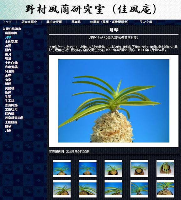 http://www.fuuran.jp/jiman_