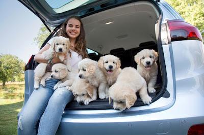 Ταξίδι με σκύλο: H Opel διαθέτει χώρους και άλλα πρακτικά αξεσουάρ