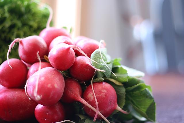 Légumes Autorisés Pour Chien - Radis