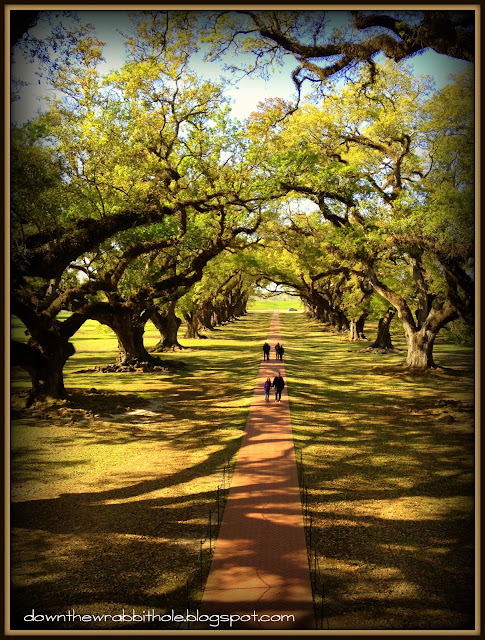 Oak Alley plantation, New Orleans plantations, Louisiana history