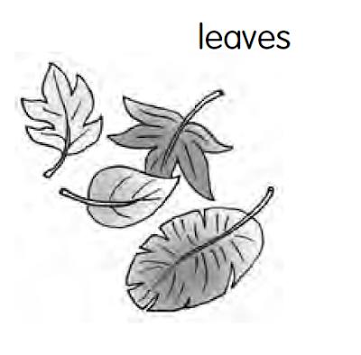 Neuter Nouns Dalam Bahasa Inggris