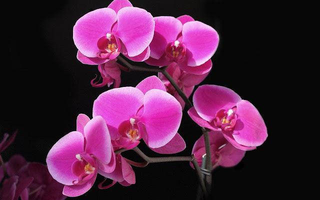 Prachtige roze bloemen