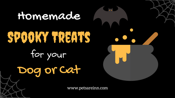 DIY pet treats Halloween