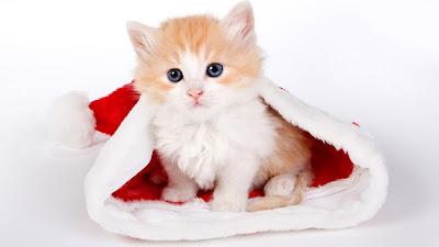 Kerstmuts met oranje kat