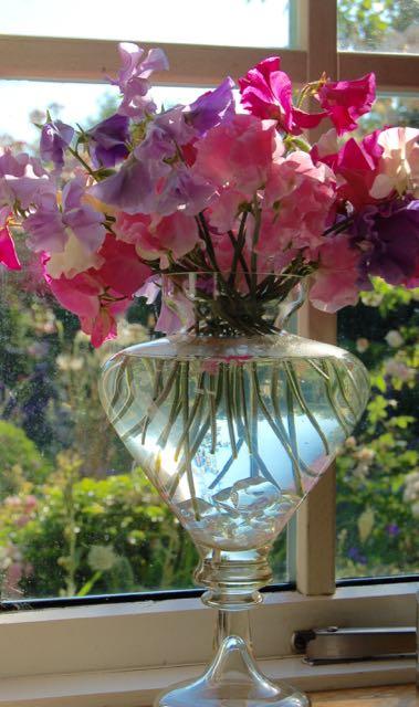 geurende lathyrus in vaas