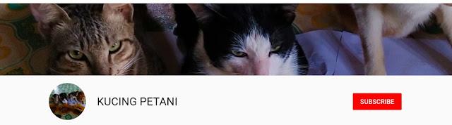kucing petani video viral