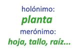 Ejemplos de merónimos
