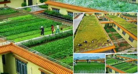 Pengertian Pertanian Menurut Para Ahli Dan Contoh Pertaniannya