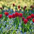 Virághagyma mennyisége tavaszi ágyáshoz