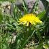 Matices de primavera en el Valle de Benasque