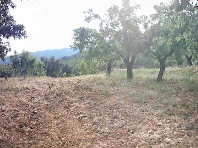 La pileta, camino, pantano de Pena, embalse, finca, almendros, olivos