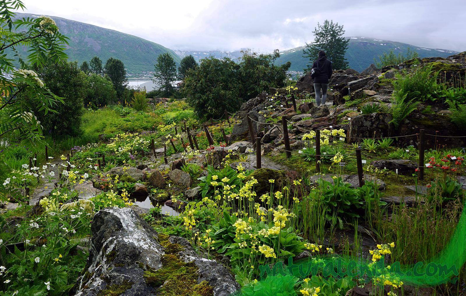jardin botanico de tromso en noruega