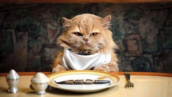 Macam Macam Makanan Kucing Anggora Beli Ataupun Alami