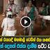 Sri Lankan Amazing Wedding Dance Video