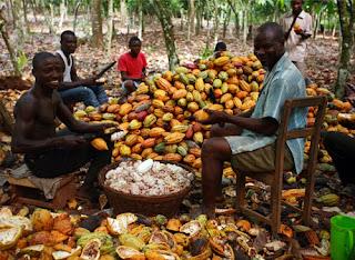 Olam supports 10,000 cocoa farmers 1