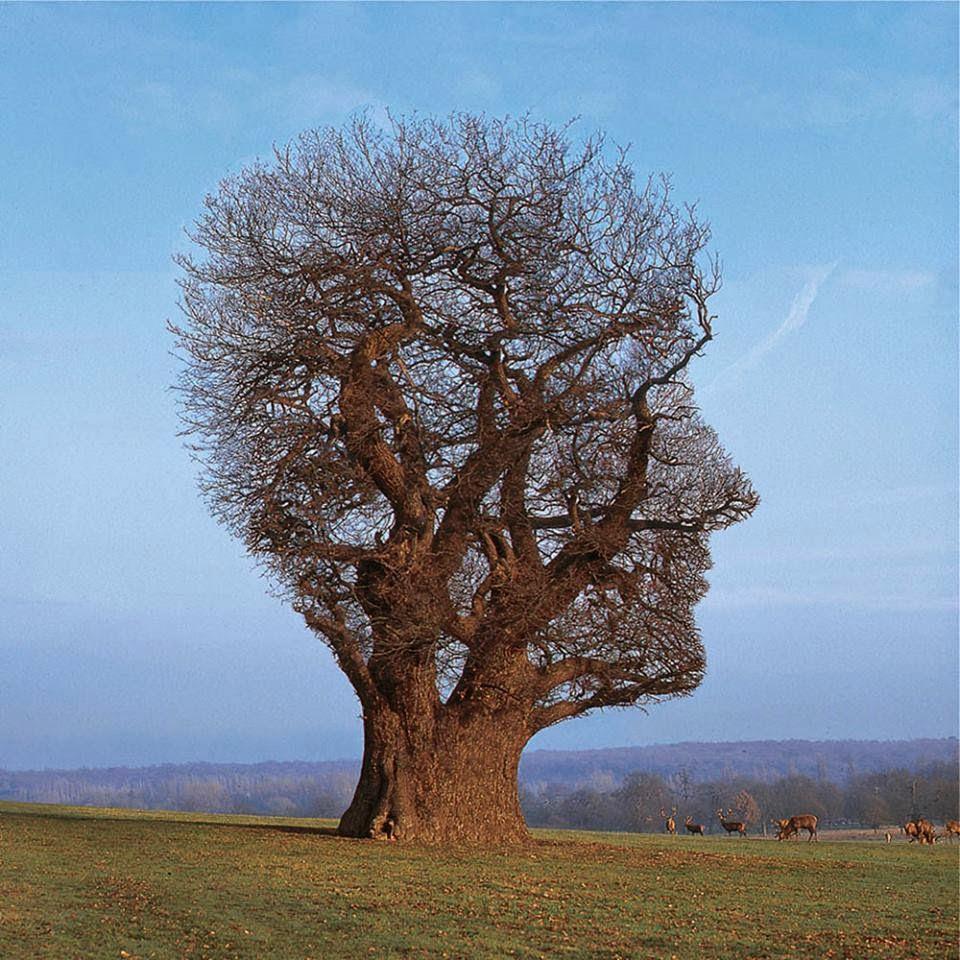 elagage arbre correze