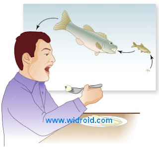 Food chain. Tiny living organisms such as bacteria, algae, microscopic aquatic plants (e.g., phytoplankton), and microscopic aquatic animals (e.g., zooplankton) are eaten by larger animals, which in turn are eaten by still larger animals, etc., until an animal in the chain is consumed by a human. Humans are at the top of the food chain.