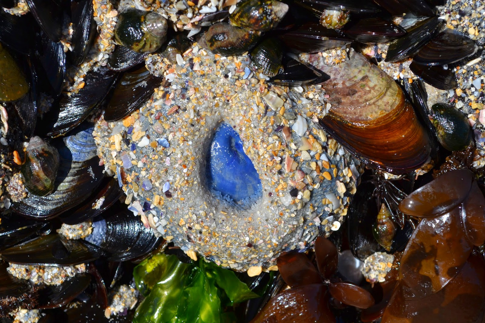 Sea anemone with blue inner