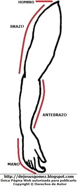 Dibujo del brazo del cuerpo humano para colorear pintar imprimir. Dibujo del brazo de Jesus Gómez