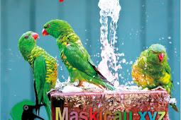 Manfaat Terapi Mandi Air Es Atau Dingin Untuk Lovebird