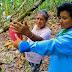 DRA Huánuco intensifica la vigilancia y capacitaciones fitosanitarias en los agricultores de la Provincia